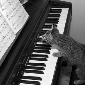 котенок играет на фортепиано
