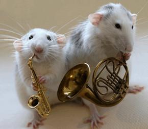Животные и музыка: влияние музыки на животных, животные с музыкальным слухом, Музыкальный класс